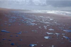Startup do portfólio da Bossa Nova tem solução que pode ajudar a resolver o problema com petróleo nas praias do nordeste